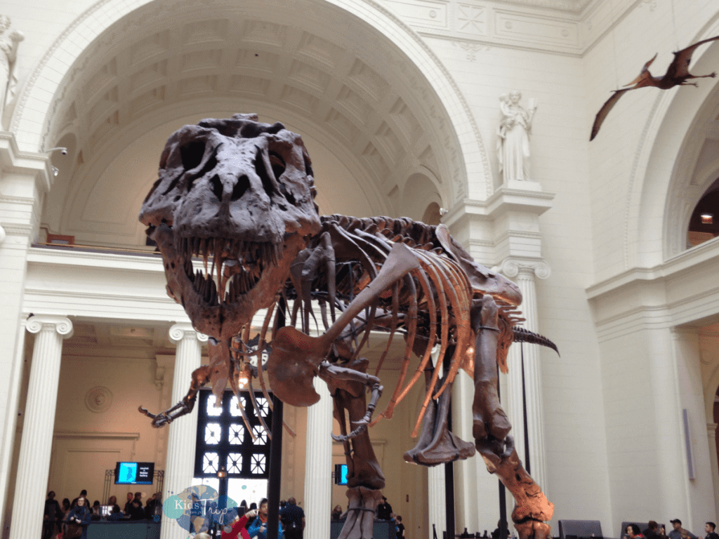 Best Chicago Attractions to Visit with Families Field Museum-Kids Are A Trip