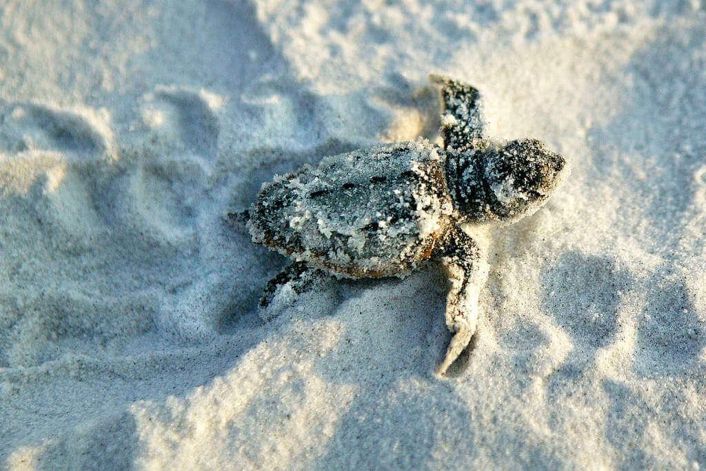 Turtles-GCFL