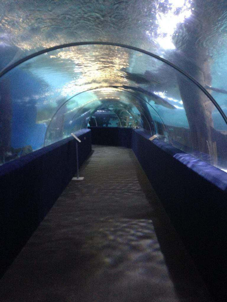 Shark Tube Great Cleveland Aquarium-Kids Are A Trip
