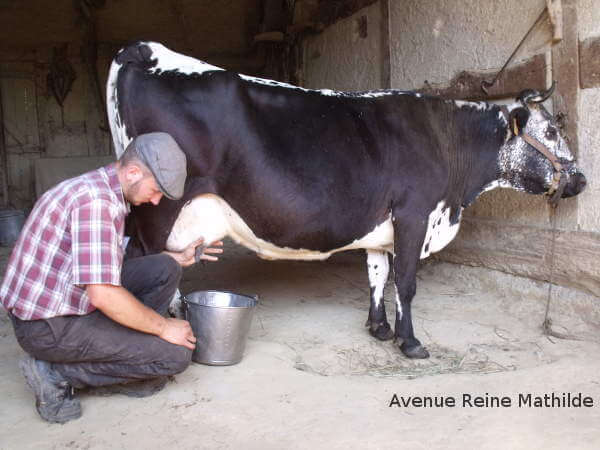 5 Reasons to Visit Alsace écomusée and cow milking-Kids Are A Trip