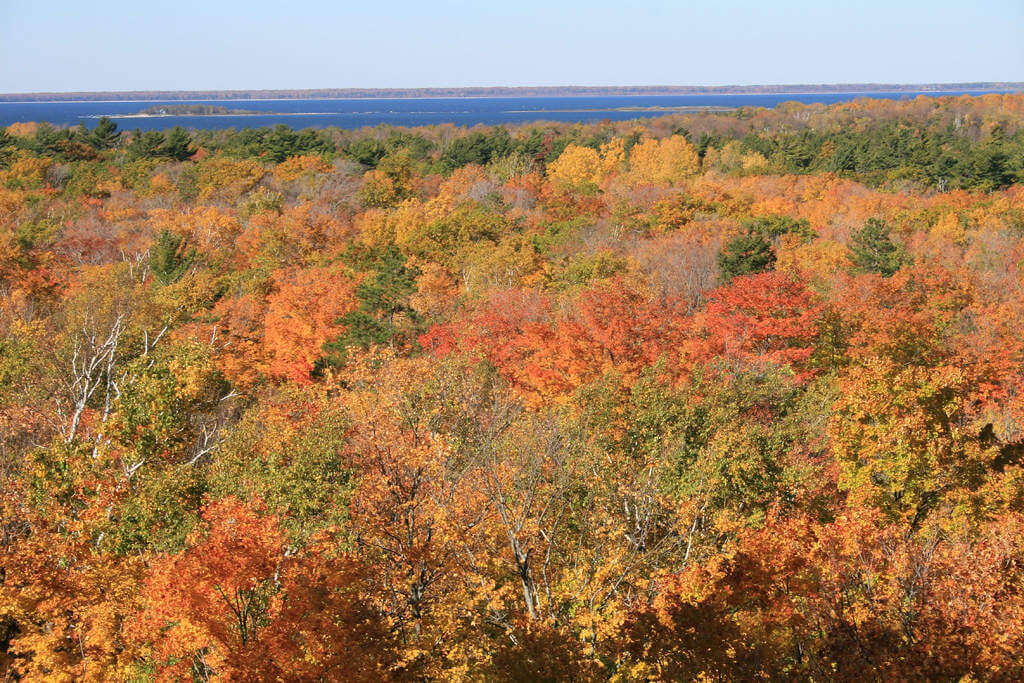 Fun Fall Activities in Chicago and Illinois Fall Leaves in Door County-Kids Are A Trip