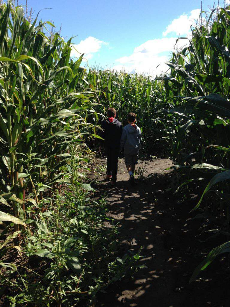 fun fall activities in Chicago and Illinois Explore Richardson Corn Maze-Kids Are A Trip