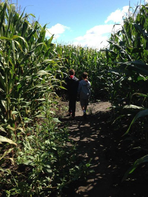 Explore Richardson Corn Maze Fall Activity-Kids Are A Trip