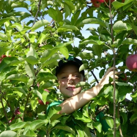 Where to Pick Your Own Apples Near Chicago