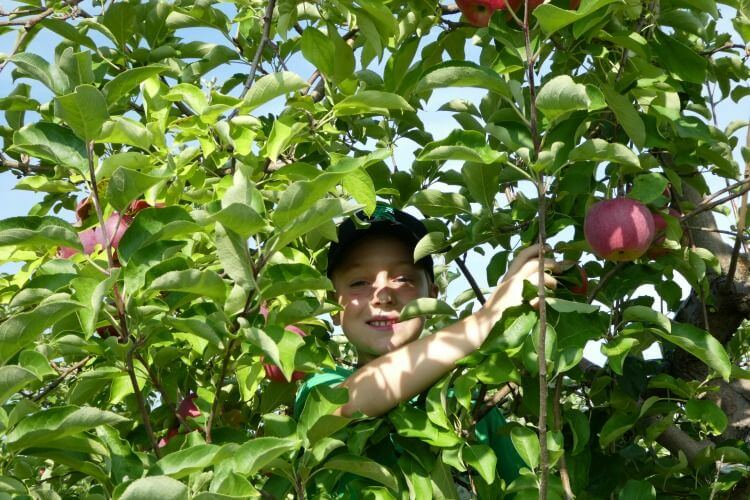 It's time for apple season! We have the best u pick farms near Chicago and apple orchard tips and recipes to carry you through the season! - Kids Are A Trip