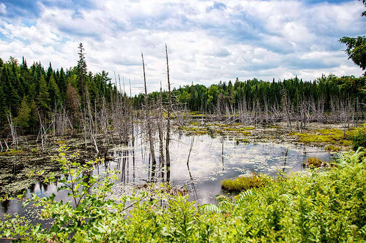 Family Friendly Things to Do Fredericton New Brunswick Mactaquac Beaver Pond-Kids Are A Trip
