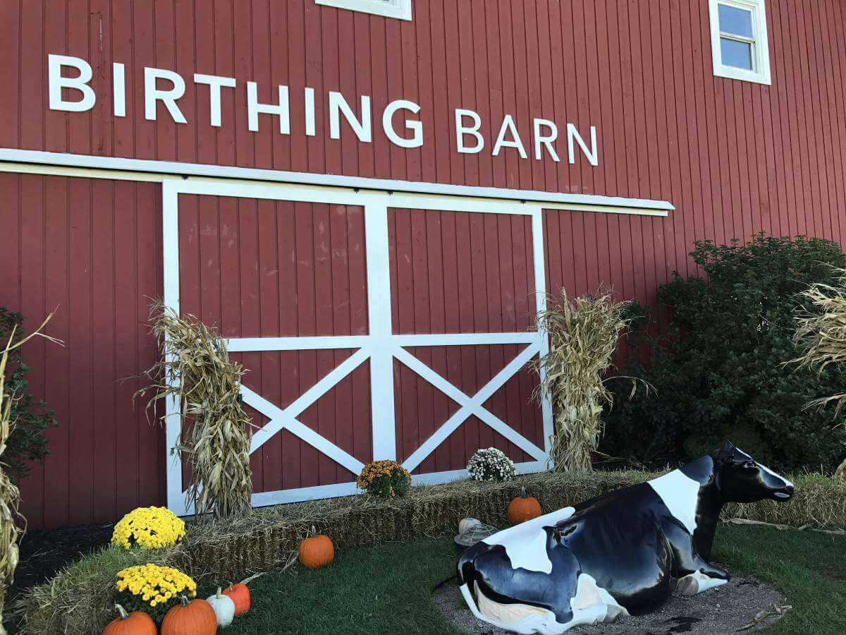 Visiting Fair Oaks Farms Indiana Birthing Barn-Kids Are A Trip