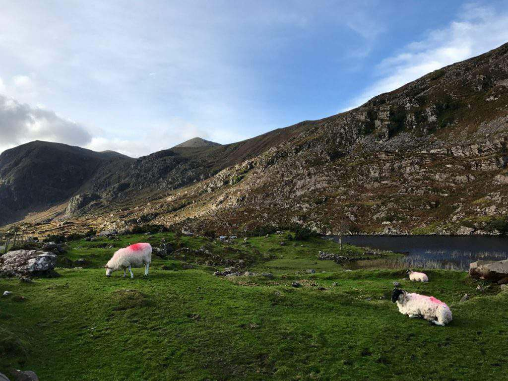 Books About Ireland to read with kids-Kids Are A Trip
