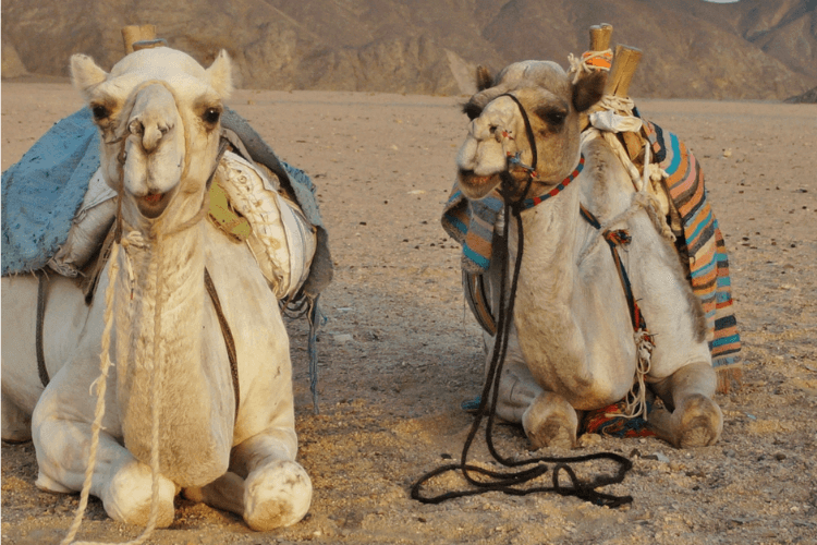 Best-Day-Trips-from-Dubai-with-Kids-Desert-Safari-Kids-Are-A-Trip