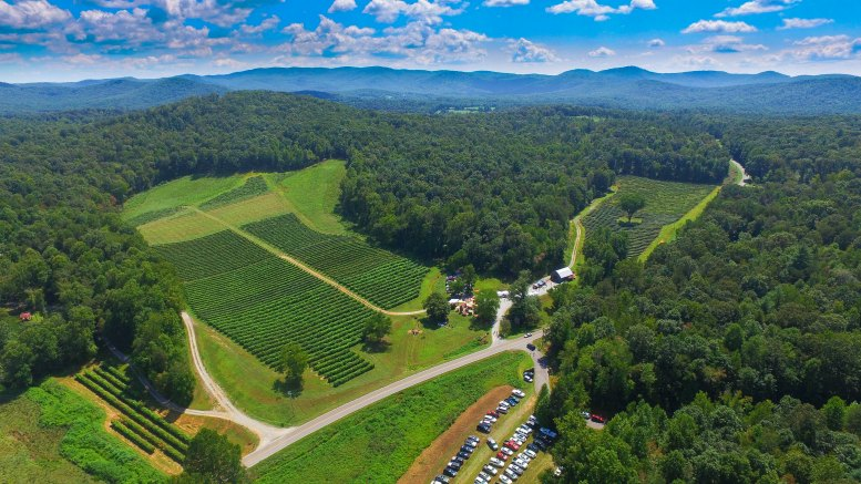 Best Atlanta Day Trips Catecay Winery Elllijay-Kids Are A Trip