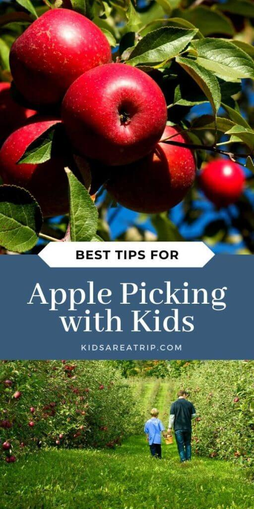 Best Tips for Apple Picking with Kids-Kids Are A Trip