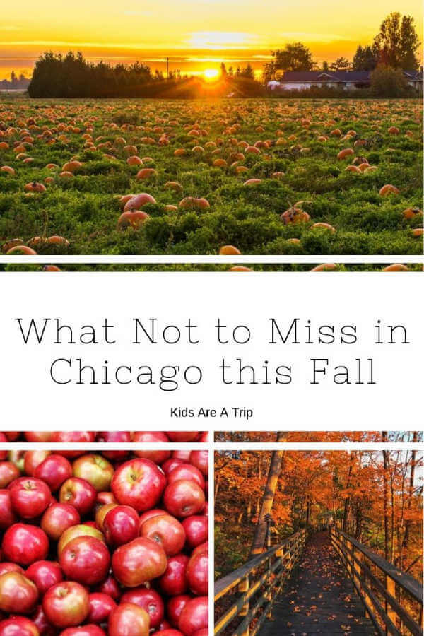 Fall in Chicago-Kids Are a Trip
