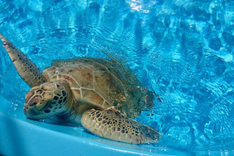 Loggerhead-Marinelife-Center-The-Palm-Beaches-Kids-Are-A-Trip