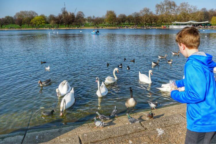 Feeding-Ducks-in-Hyde-Park-London-Kids-Are-A-Trip
