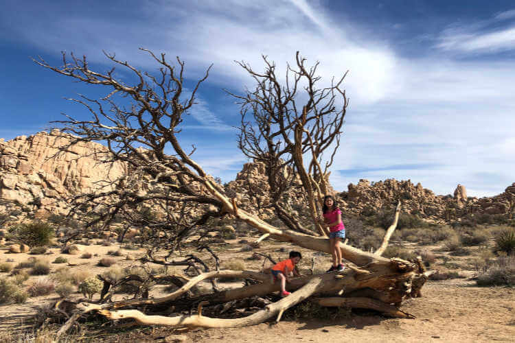 Joshua Tree National Park-Kids Are A Trip