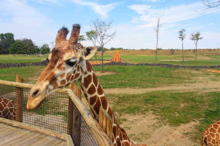 Heart of Africa at the Columbus Zoo and Aquarium - Katie Seemann - Zen Life and Travel