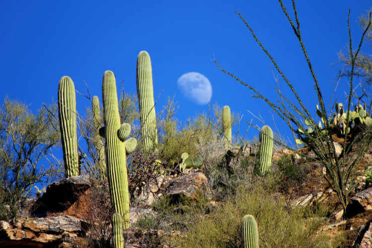 Sabino Canyon Saguaros Tucson Outdoor Adventures-Kids Are a Trip