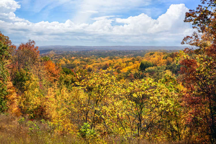Brown County State Park Indiana fall treetops-Kids Are A Trip