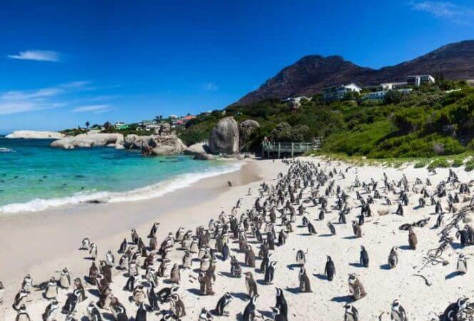 Cape Town Boulders Beach-Kids Are A Trip