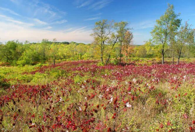 Kettle Moraine State Forest-Kids Are A Trip