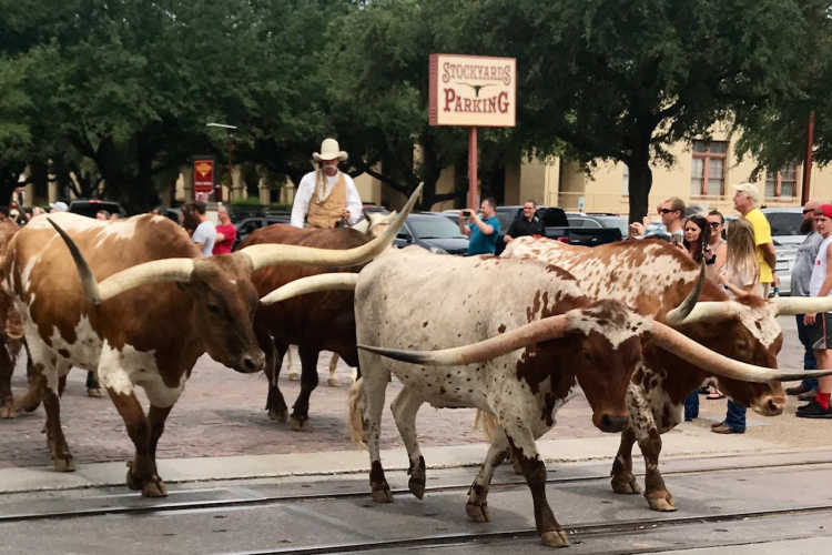 Fort Worth Stockyards-Kids Are A Trip
